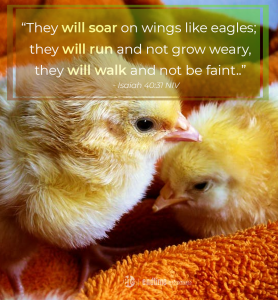 """""""They will soar on wings like eagles; they will run and not grow weary, they will walk and not be faint."""" - Isaiah 40:31 NIV"""